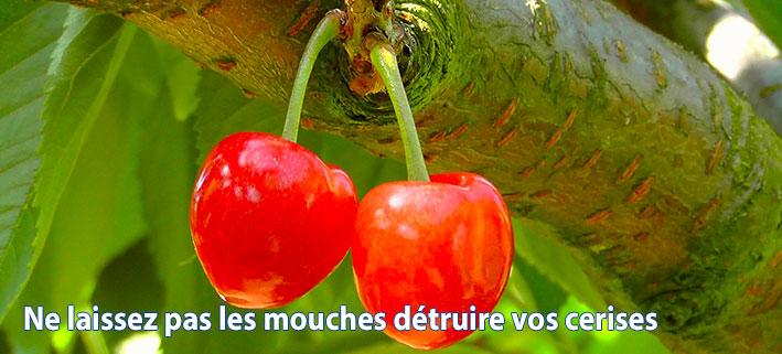 Protection écologique des cerises.